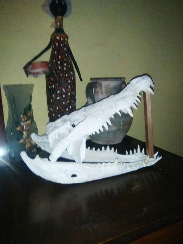craneo de cocodrilo