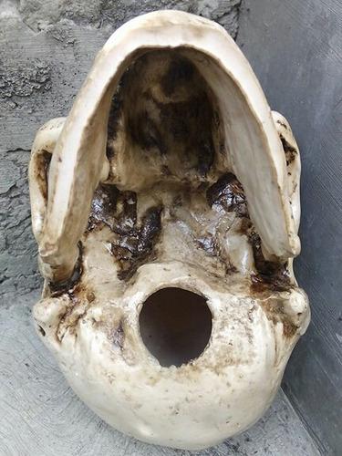 cráneo de resina humano , réplica , realista.