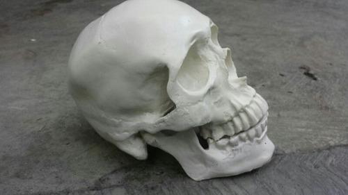craneo humano de resina con mandíbula articulada.