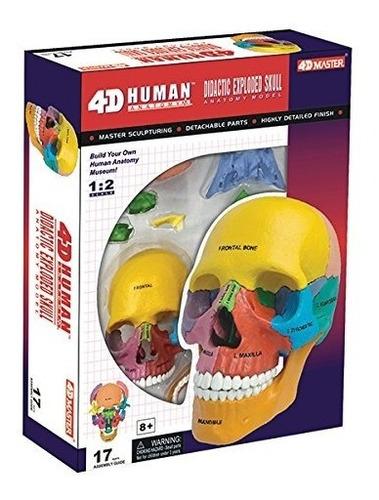 craneo humano desarmable modelo 4 d 17 piezas envio gratis
