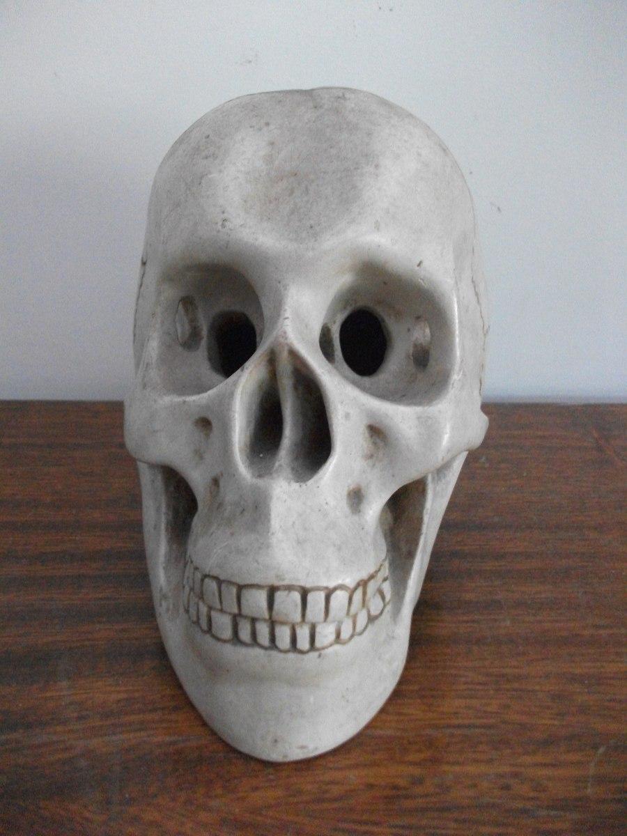 Único Cráneo Humano Colección de Imágenes - Imágenes de Anatomía ...