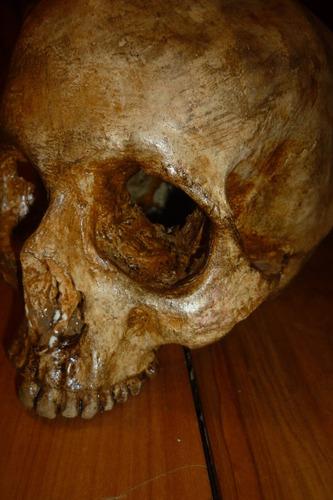 cráneo humano tamaño real en resina atoxica adorno