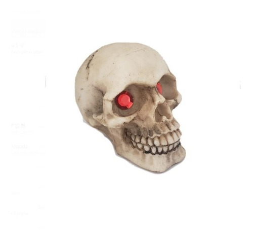 cranio caveira resina decorativo