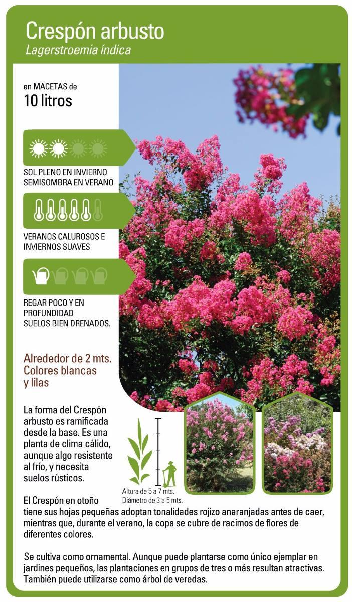 Plantas tapizantes resistentes al frio abelia floribunda for Arbustos de exterior resistentes