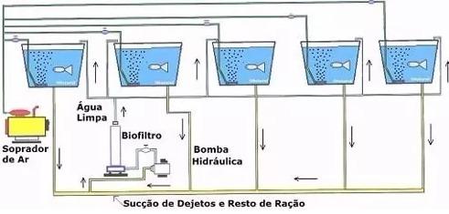 criação de tilápias em caixas dagua e piscinas frete grátis