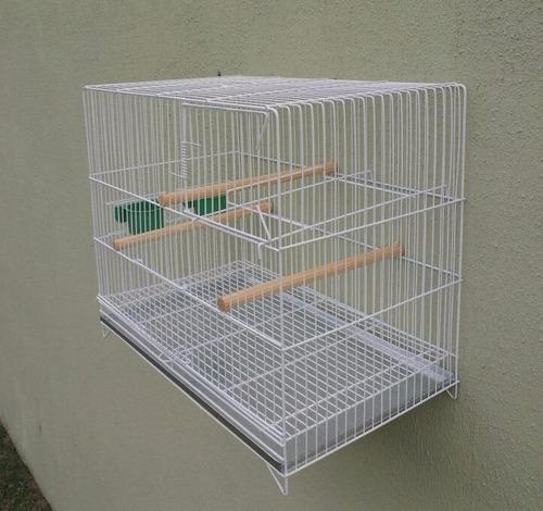 criadeira para agapornis, periquito inglês - pequena