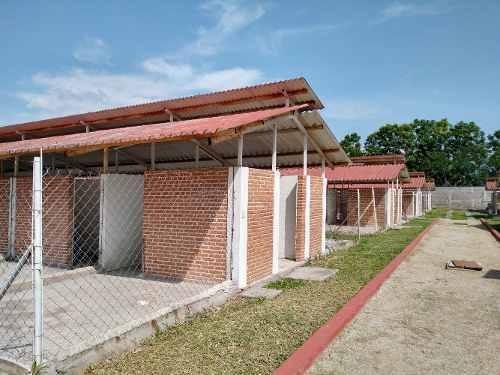 criadero para perros, gallos o puercos en venta yautepec