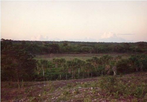 (crm-1947-95)  terreno carretera escarcega chetumal km. 165, entre campeche y chetumal