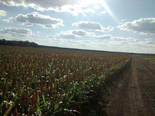 (crm-5983-9)  120 hectáreas en paraíso campeche