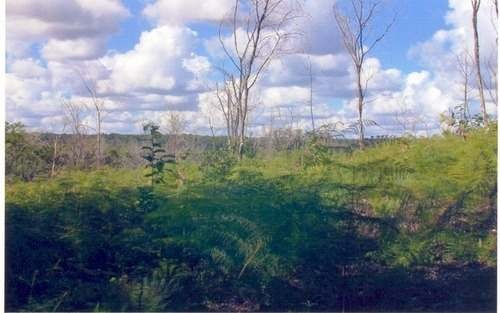 (crm-60-17)  terreno en xul ha quintana roo excelente para desarrollar.