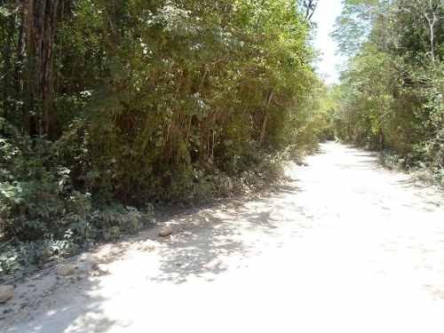 (crm-634-610)  se vende terreno con cenote en rivera maya y tulum