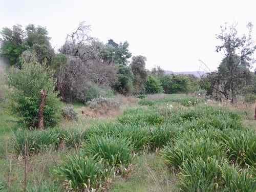 (crm-92-3332)   texcoco edo de mex terreno urbano en venta