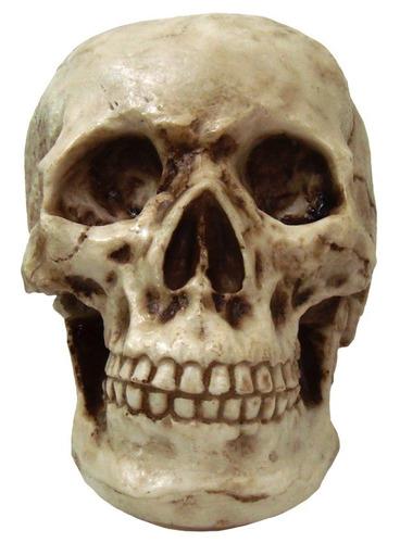 crânio caveira grande tamanho real em resina decorativo