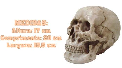 crânio caveira grande tamanho real enfeites casa resina