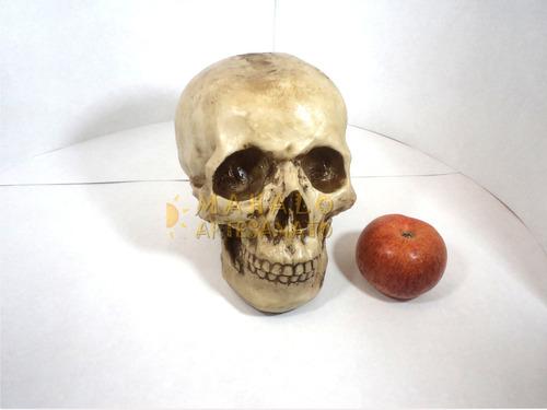 crânio caveira tamanho grande real em resina