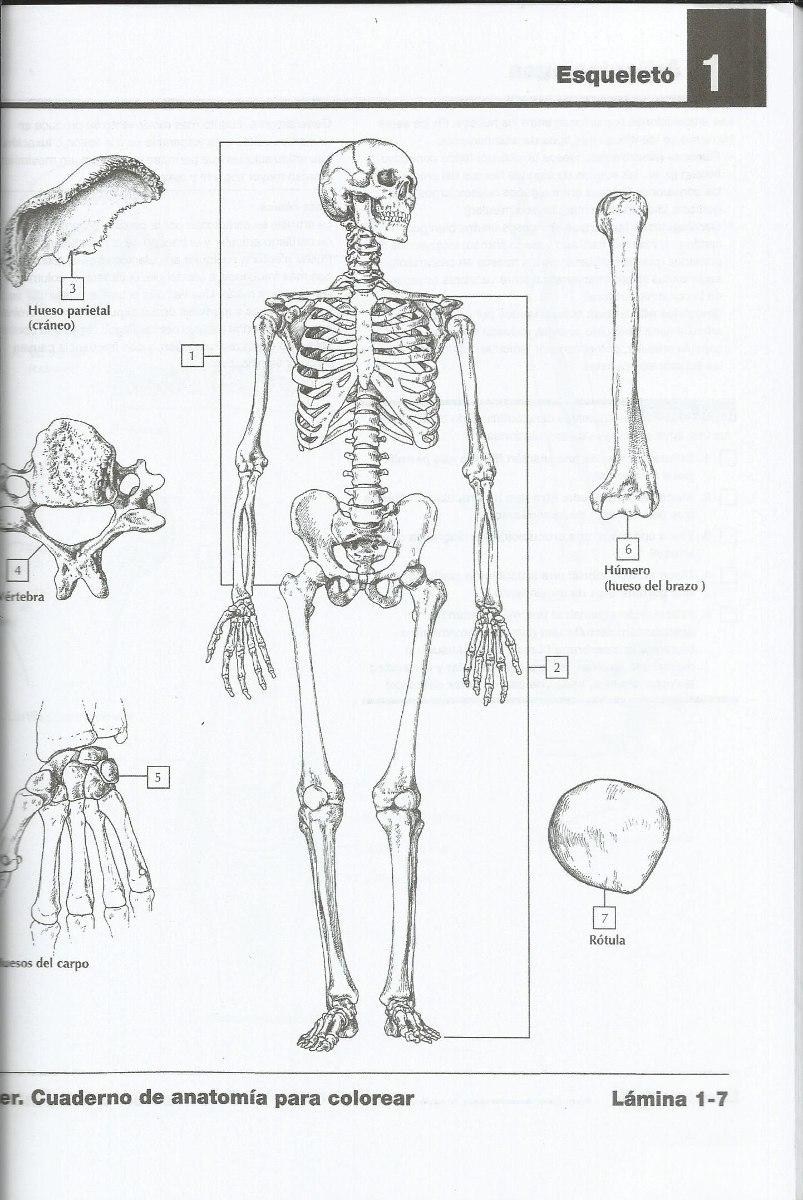 Cuaderno De Anatomía Para Colorear Netter - S/ 60,00 en Mercado Libre