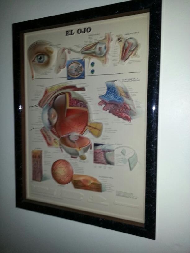 Cuadro Anatomía Del Ojo En Relieve - Bs. 500,00 en Mercado Libre