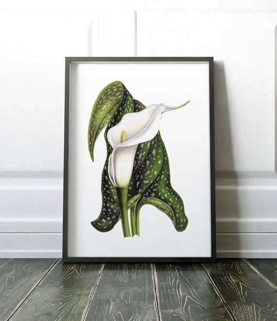 Cuadro Decorativo Lilium Ii (13 X 18 Marco Blanco) - $ 450,00 en ...