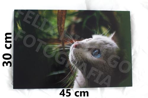 cuadro fotografico gato 30*45cm