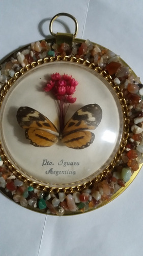 cuadro redondo con mariposa natural