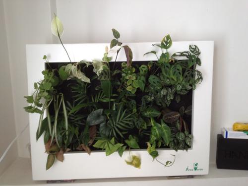 cuadro vivo, living frame, jardín vertical natural 80x60