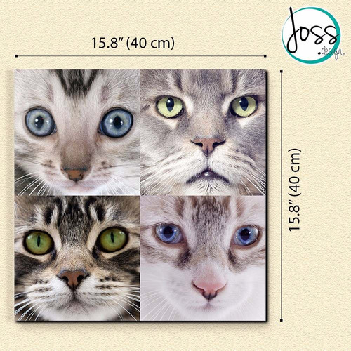 cuadros decorativos jossdesign collage gato set de2pzs 60x60