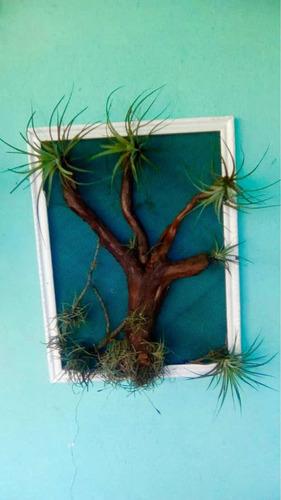 cuadros vivos decorativos plantas ecodecoracion