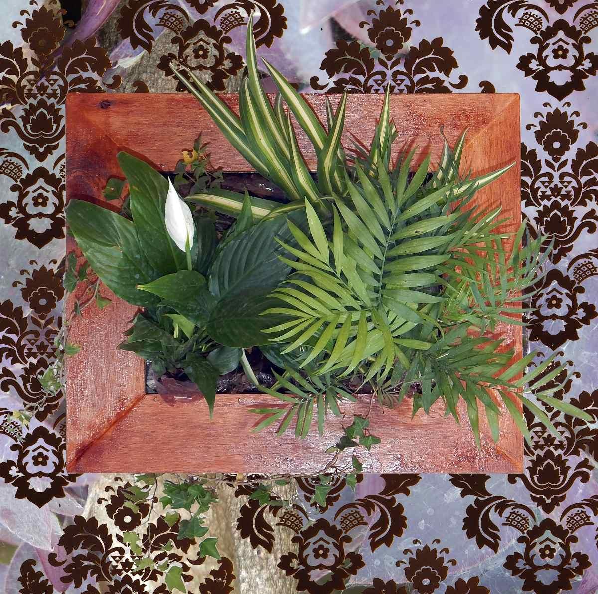 Cuadros Vivos Plantas Naturales Limpian Y Purifican El Aire  ~ Plantas Que Limpian El Ambiente