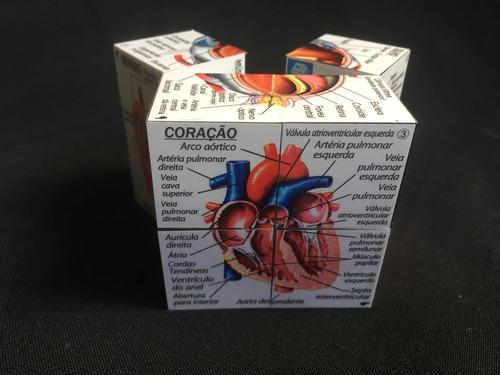 cubo anatomia humana