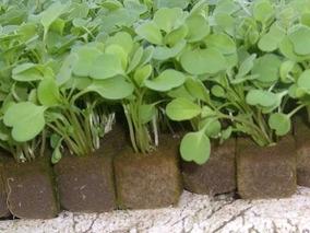7cd2961cd20 Espuma Fenolica Para Hidroponia - Todo para Jardines y Exteriores en  Mercado Libre Argentina