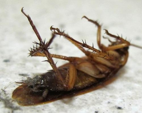 cucarachas, exterminador rapidisimo