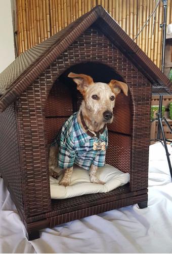cucha tipo casita para perros