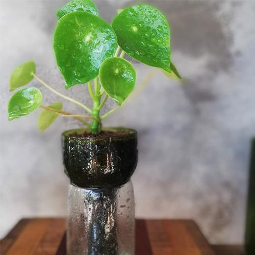 cuchara little plant 15, maceta autorregante