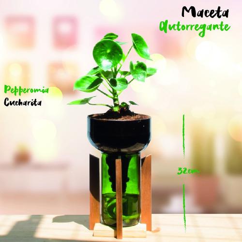 cuchara little plant 32 con soporte, maceta autorregante