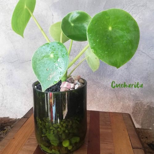 cuchara little terrario 10, maceta de vidrio
