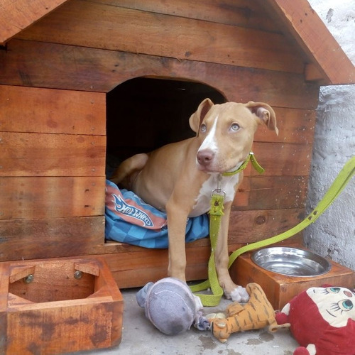 cuchas para perros(pallets)  aislante térmico