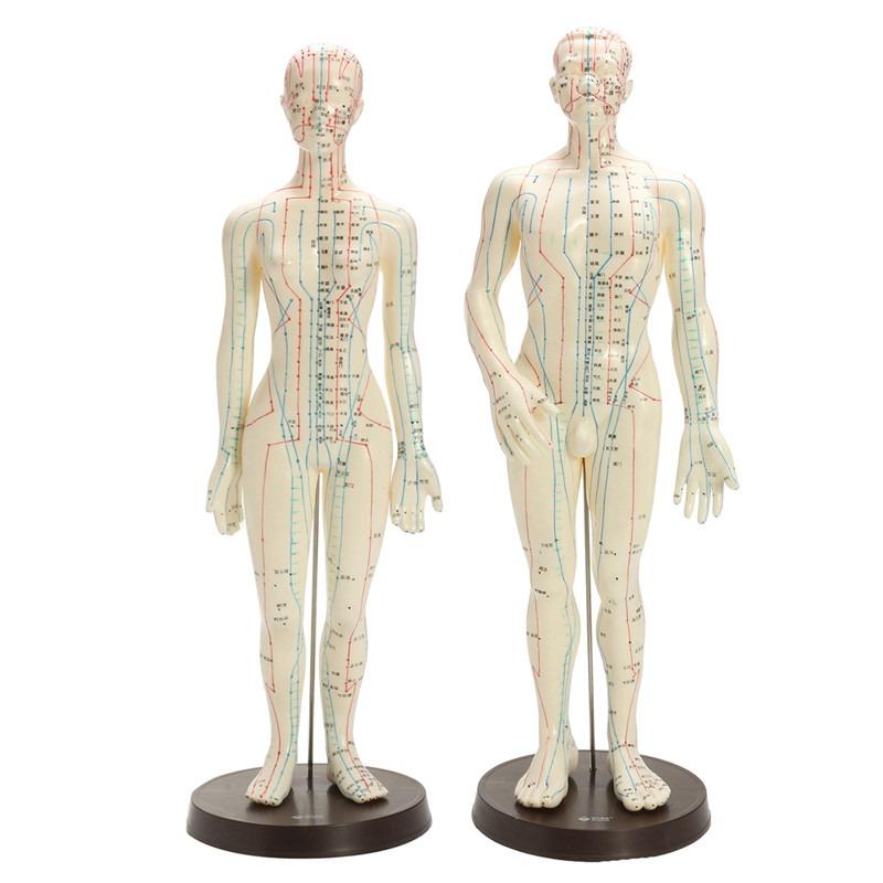 Cuerpo Humano Acupuntura Médico Modelo Masculino Femenino Me ...