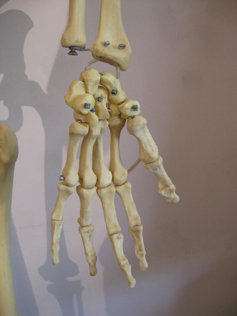 Cuerpo Humano Esqueleto 180cm Resina Huesos = Al Ser Humano ...