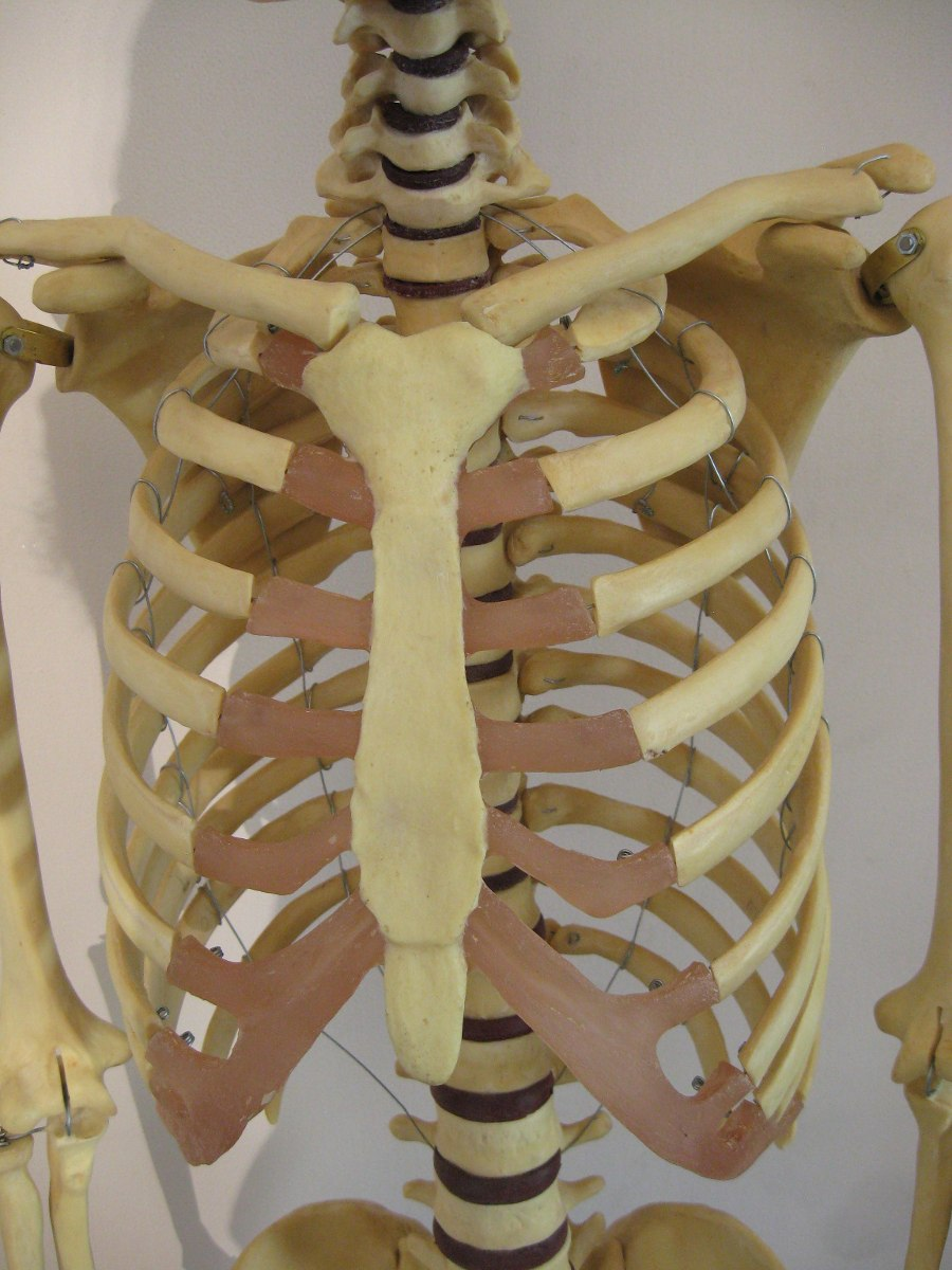 Cuerpo Humano, Esqueleto Tamaño Natural 180 Cm De Resina - $ 13.900 ...