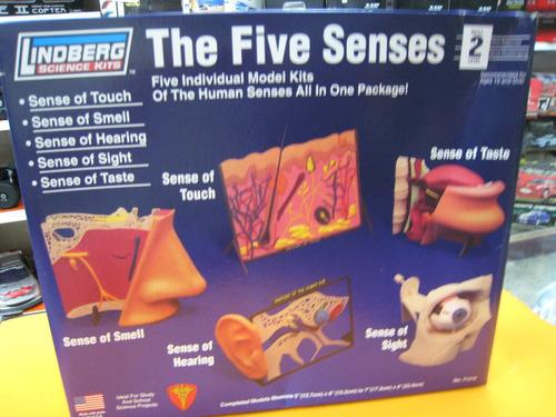 cuerpo humano los 5 sentidos para armar  lindberg  ciencias