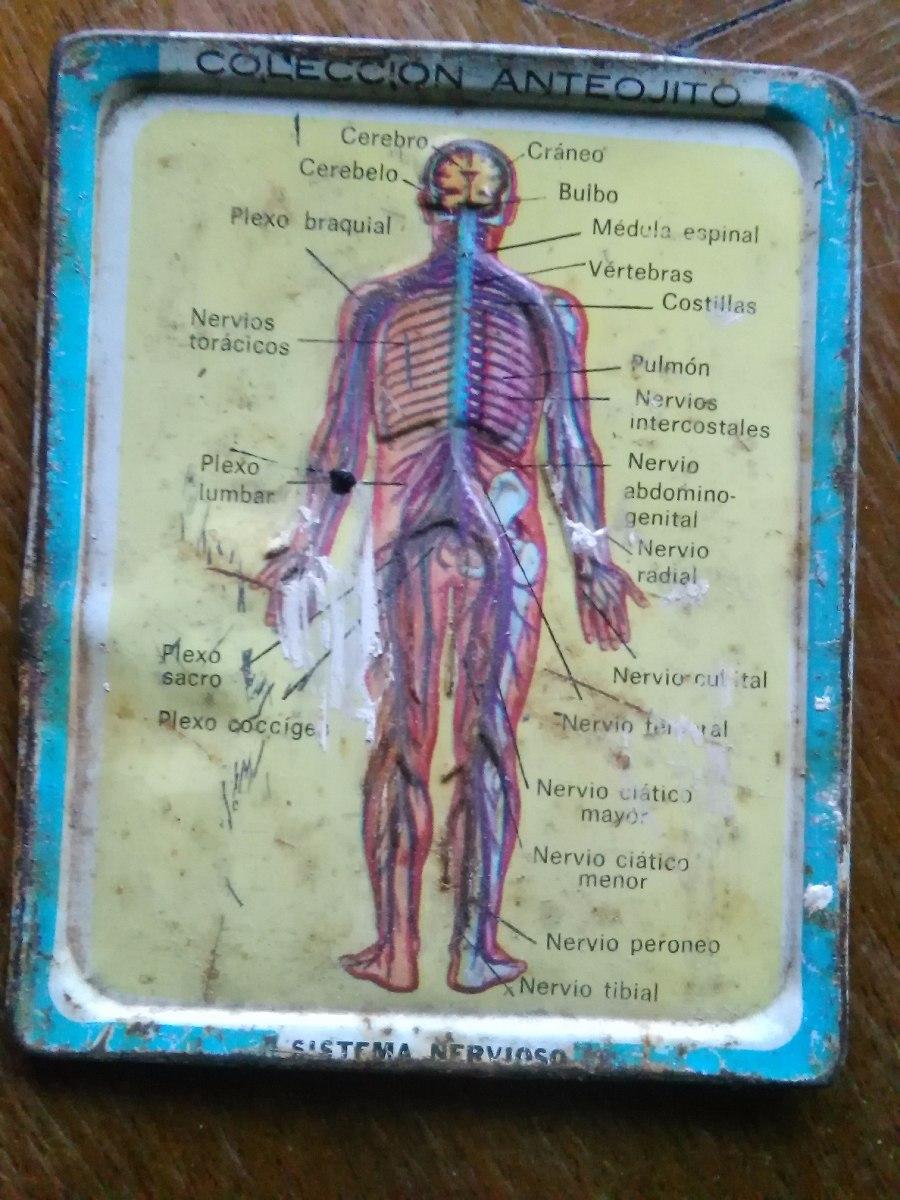 Cuerpo Humano Sistema Nervioso Chapa Colección Anteojito - $ 30,00 ...