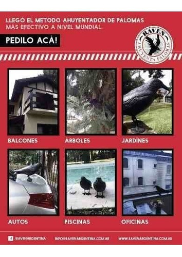 cuervo raven ahuyenta espanta palomas pajaro