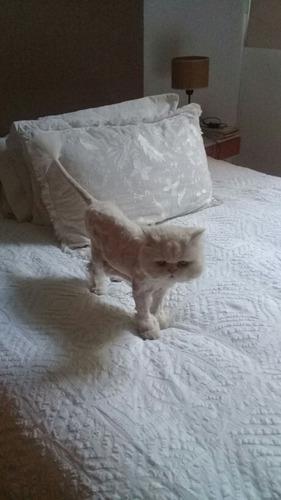 cuidadora niñera de gatitos