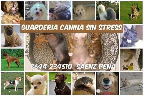 cuido tus mascotas durante tu viaje, cuidados intensivos