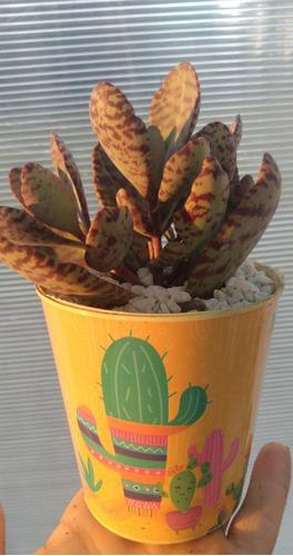 curso a distancia: cultivo orgánico de cactus y suculentas