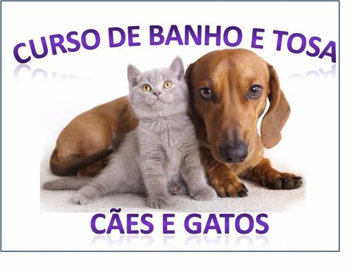 curso banho e tosa para cães, gatos em 23 dvds - a11