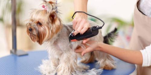 curso banho e tosa para cães, gatos em 23 dvds - a48