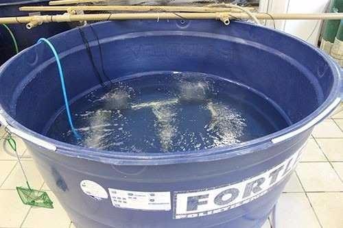Curso cria o de til pias em caixa d 39 agua psicultura for Como criar tilapias