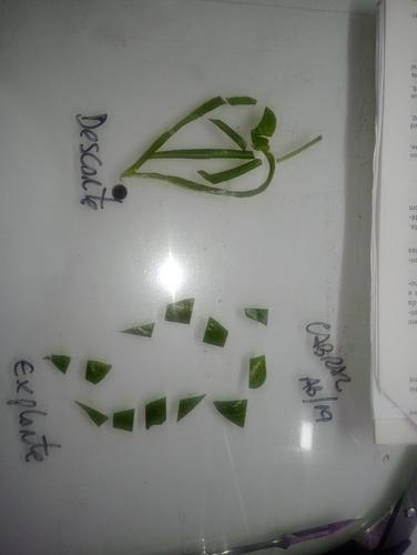 curso de clonagem e semeadura de orquideas e outras plantas