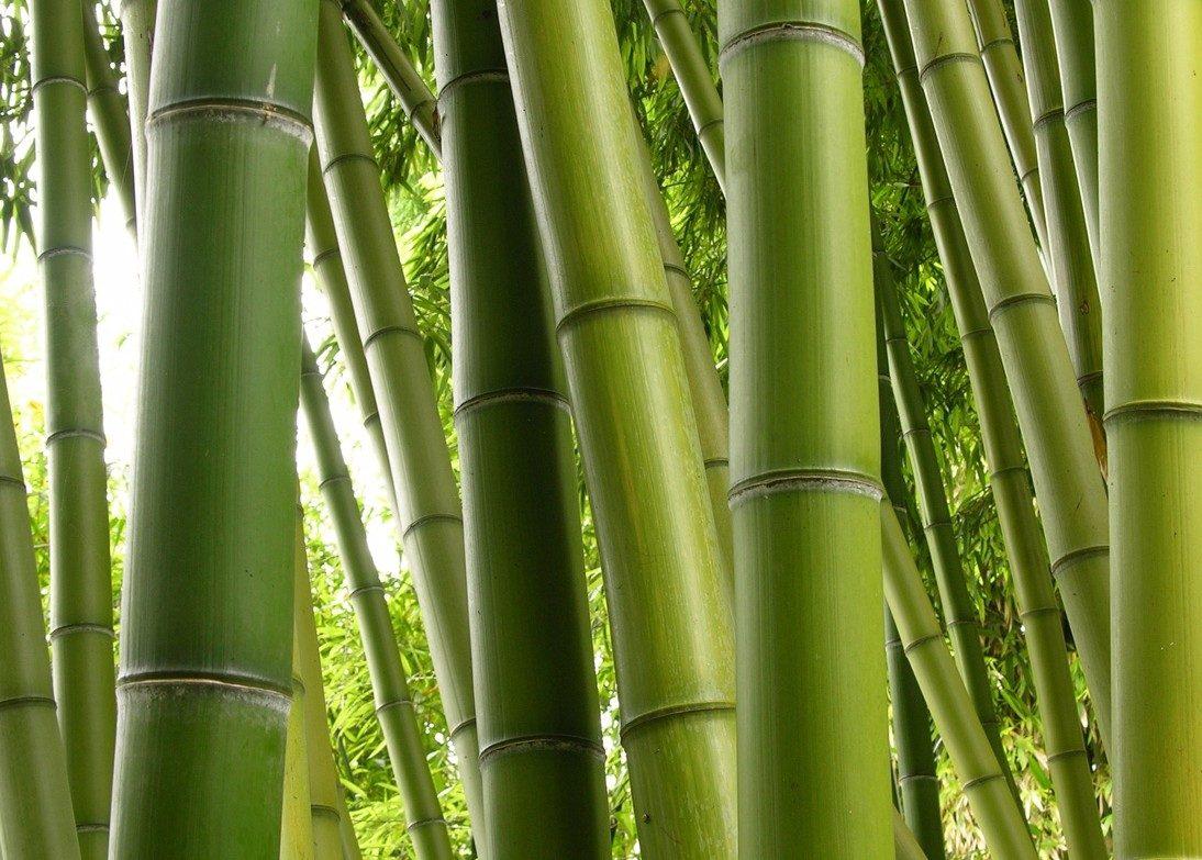 Curso de constru o e artesanato com bambu r 12 00 em mercado livre - Cultivo del bambu ...